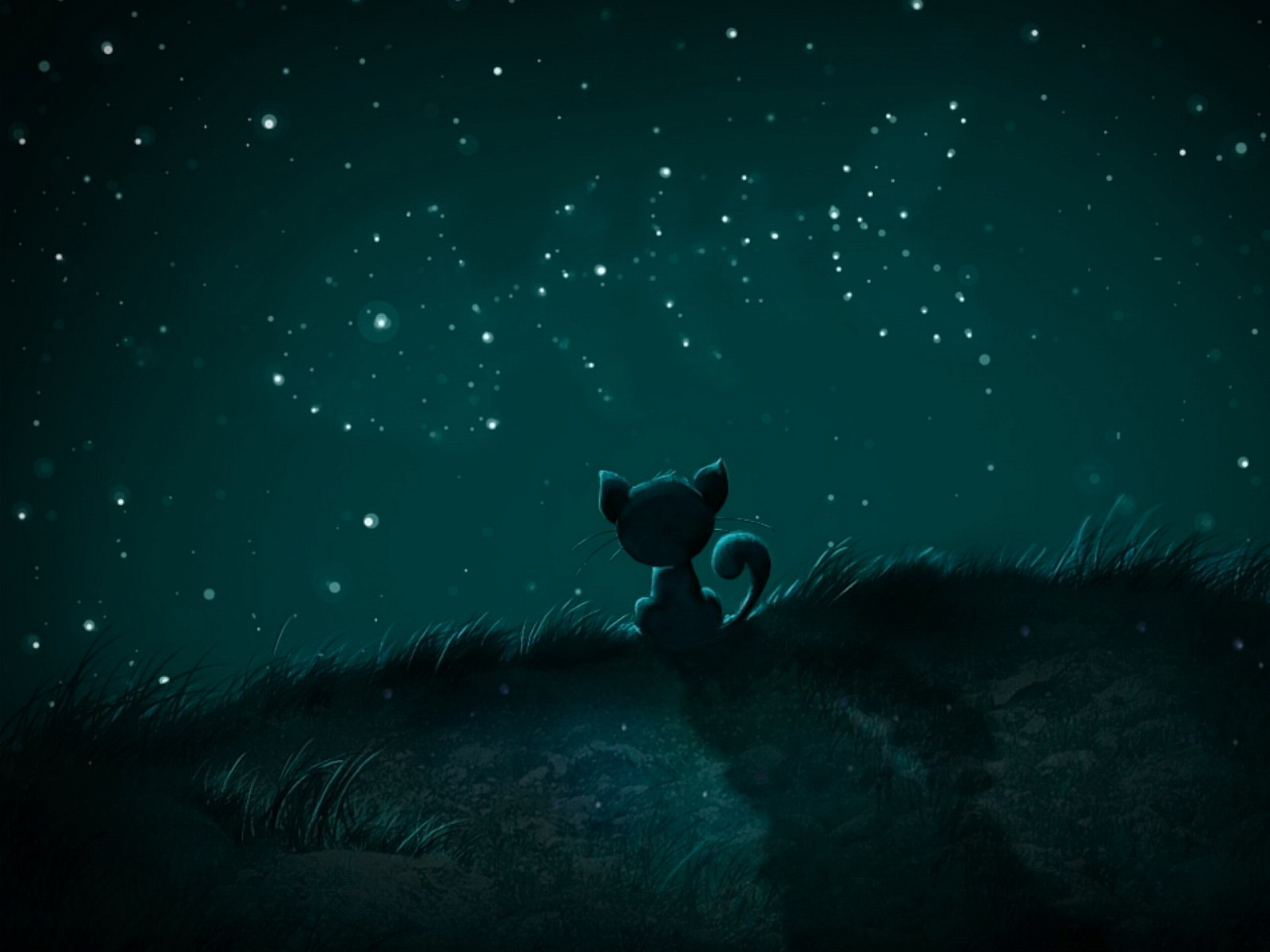 stars wallpaper on Cat Stars Night Wallpaper  Desktop  Hd  Free Download
